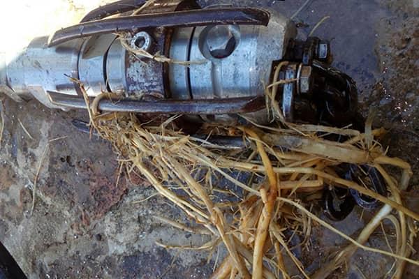eliminación de raíces en colectores